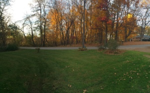 Panoramic photo of the copse